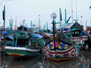 petik laut brondong lamongan
