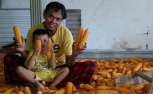 Edy Sedang Mipili Jagung Bersama Anaknya