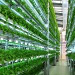 Solusi Keterbatasan Lahan Pertanian dengan Vertical Farming