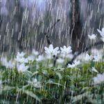 Hujan di Ramadlanku