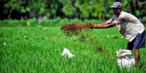 Korelasi Pertanian Berkelanjutan dengan Perlakuan Organik